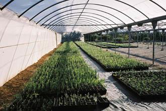 Vivero de olivos los grillos for Viveros de olivos